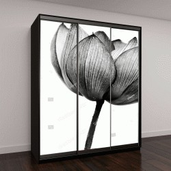 """Шкаф купе с фотопечатью """"Лотос в черно-белом цвете"""""""