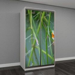 """Шкаф купе с фотопечатью """"Красноглазый зеленый Дерево лягушка сидит на зеленой ветке"""""""