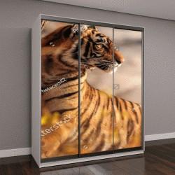 """Шкаф купе с фотопечатью """"Королевский бенгальский тигр с красивым фоном"""""""