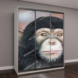"""Шкаф купе с фотопечатью """"Шимпанзе лицо"""""""