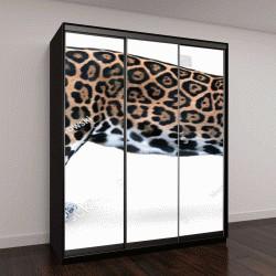 """Шкаф купе с фотопечатью """"Изолированные на белом фоне, боковой вид на Ягуар, Пантера онка, самая большая кошка в Южной Америке, глядя прямо в камеру"""""""