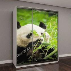"Шкаф купе с фотопечатью ""Панда ест бамбук """