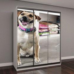 """Шкаф купе с фотопечатью """"Счастливая собака в зоомагазине"""""""
