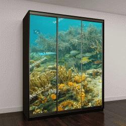 """Шкаф купе с фотопечатью """"Мир Карибского моря с мягкими кораллами и тропическими рыбами, Центральная Америка, Панама"""""""