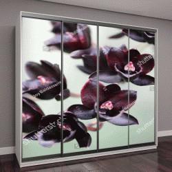 """Шкаф купе с фотопечатью """"маленькие черные орхидеи"""""""