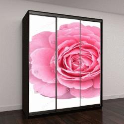 """Шкаф купе с фотопечатью """"Розовые лепестки роз цветы на День святого Валентина, изолированные на белом с отсечения путь"""""""