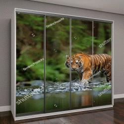 """Шкаф купе с фотопечатью """"Амурский тигр ходит по воде"""""""