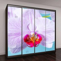 """Шкаф купе с фотопечатью """"Лепестки розовой орхидеи крупным планом"""""""