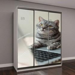 """Шкаф купе с фотопечатью """"серый кот за компьютером """""""
