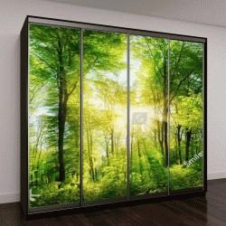 """Шкаф купе с фотопечатью """"Панорама живописного леса """""""