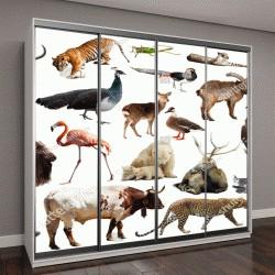 """Шкаф купе с фотопечатью """"изображения диких животных, включая птиц, млекопитающих, рептилий и насекомых"""""""
