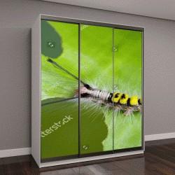 """Шкаф купе с фотопечатью """"Образ червя на зеленые листья, рептилия, которая часто встречается в природе, живущих под землей листьев и деревьев"""""""