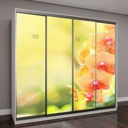 """Шкаф купе с фотопечатью """"Красивый цветок орхидеи с желтым фоном"""""""