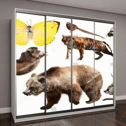 "Шкаф купе с фотопечатью ""рептилии и животные на белом фоне"""