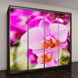 """Шкаф купе с фотопечатью """"розовый цветок и ветви тропическом саду"""""""
