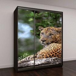 """Шкаф купе с фотопечатью """"Леопард на камне"""""""