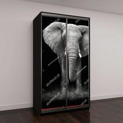 """Шкаф купе с фотопечатью """"Слон"""""""