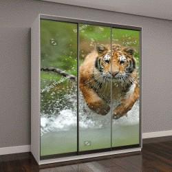 """Шкаф купе с фотопечатью """"Сибирский тигр"""""""