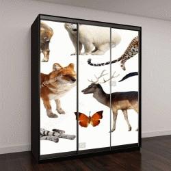 """Шкаф купе с фотопечатью """"ассортимент азиатских диких птиц, рептилий и животных на белом фоне"""""""
