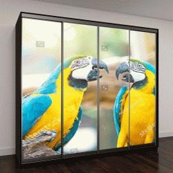 """Шкаф купе с фотопечатью """"Два красочных попугая сидят на журнале"""""""