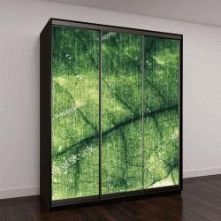 """Шкаф купе с фотопечатью """"Листья дерева,темный тон, винтаж"""""""