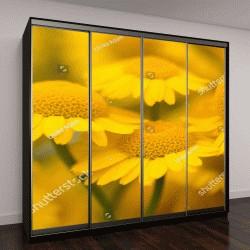 """Шкаф купе с фотопечатью """"Желтые цветы ромашки"""""""