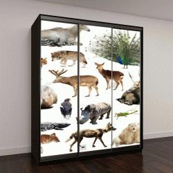 """Шкаф купе с фотопечатью """"набор диких животных, включая птиц, млекопитающих, рептилий и насекомых"""""""