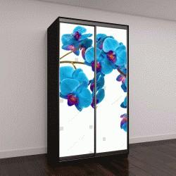 """Шкаф купе с фотопечатью """"орхидеи на фоне изолированные"""""""