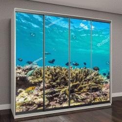 """Шкаф купе с фотопечатью """"Подводный мир, пейзажи, красочные коралловые рифы и голубая прозрачная вода, солнечный свет и солнечный луч"""""""