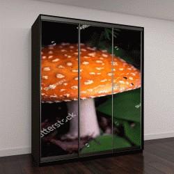 """Шкаф купе с фотопечатью """"Дикий гриб растет во влажном лесу"""""""