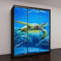 """Шкаф купе с фотопечатью """"Морская черепаха"""""""