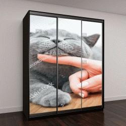 """Шкаф купе с фотопечатью """"Счастливый котенок """""""