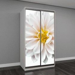 """Шкаф купе с фотопечатью """"Белый цветок"""""""