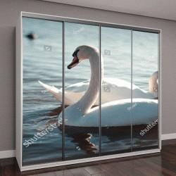 """Шкаф купе с фотопечатью """"Красивый белый лебедь с семьей """""""