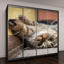 """Шкаф купе с фотопечатью """"Милый кот лежит на спине на ковре"""""""