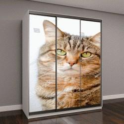 """Шкаф купе с фотопечатью """"мраморный кот с желтыми глазами на белом фоне"""""""