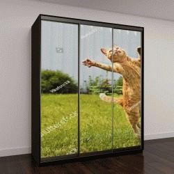 """Шкаф купе с фотопечатью """"Рыжий кот в прыжке на зеленой траве """""""