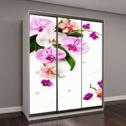 """Шкаф купе с фотопечатью """"Цветочный кадр с орхидеей"""""""