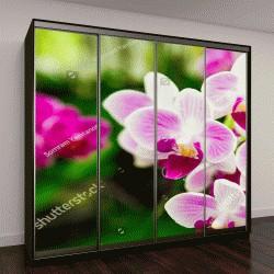 """Шкаф купе с фотопечатью """"розовый Дендробиум в тропическом саду"""""""