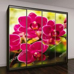 """Шкаф купе с фотопечатью """"розовая орхидея в зимний день """""""