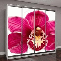"""Шкаф купе с фотопечатью """"Фиолетовый цветок орхидеи на белом фоне"""""""