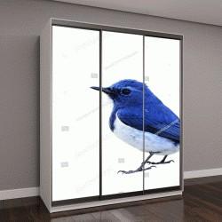 """Шкаф купе с фотопечатью """"Красивая синяя птица, Ультрамарин, мухоловка на белом фоне"""""""