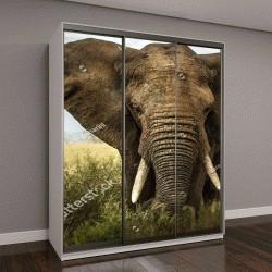 """Шкаф купе с фотопечатью """"слон на поле"""""""
