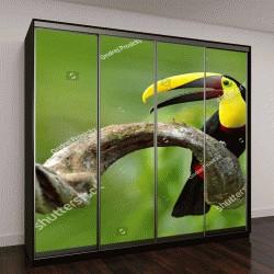 """Шкаф купе с фотопечатью """"Птица с открытым клювом, Тукан сидит на ветке """""""
