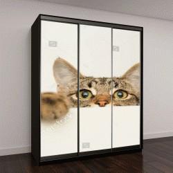 """Шкаф купе с фотопечатью """"молодой кот с любопытством выглядывает из-за белого фона"""""""