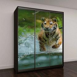 """Шкаф купе с фотопечатью """"Амурский тигр бежит в реке"""""""