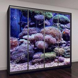 """Шкаф купе с фотопечатью """"вид кораллов Euphyllia"""""""