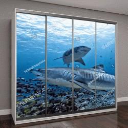 """Шкаф купе с фотопечатью """"Тигровая акула """""""