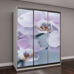 """Шкаф купе с фотопечатью """"Красивые нежные цветки орхидеи в мягком свете"""""""