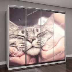"""Шкаф купе с фотопечатью """"человек гладит кошку"""""""
